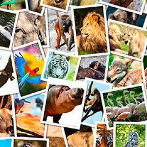 5 Тварин, які допоможуть зміцнити здоров`я
