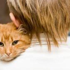 Алергія на кішок у дітей