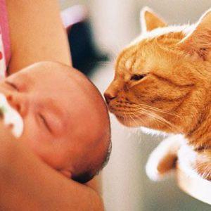 Алергія на шерсть тварин у немовлят
