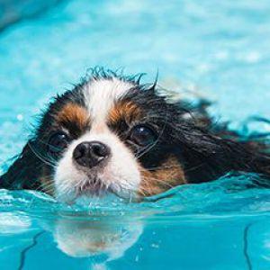 Банний день: як правильно купати вихованців