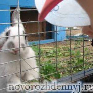 Домашні тварини та новонароджений