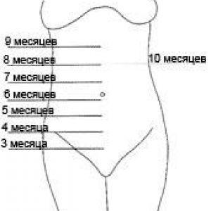 Як повинні рости розміри живота при вагітності