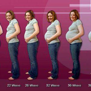 Калькулятор вагітності онлайн
