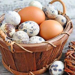 Курячі і перепелині яйця при грудному вигодовуванні: як безпечно ввести в меню