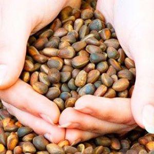 Чи можна мамі, що годує кедрові горіхи: корисні властивості і вживання при лактації