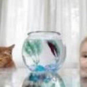 Новонароджені і домашні тварини