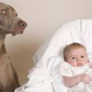 Новонароджена дитина і домашні тварини