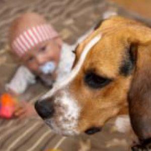 Дитину вкусила собака - що робити?