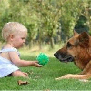 Дитину вкусила собака: що робити?