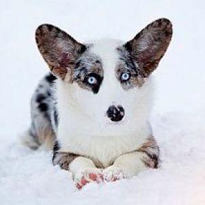 Собаку якої породи краще вибрати для сім`ї, в якій є дитина